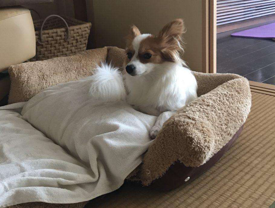 ふかふかのベッドの写真