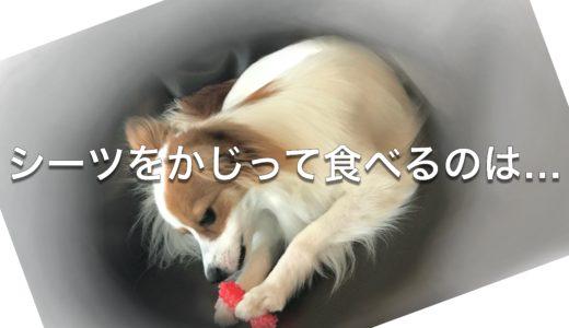 愛犬がシーツをかじって食べるのは…